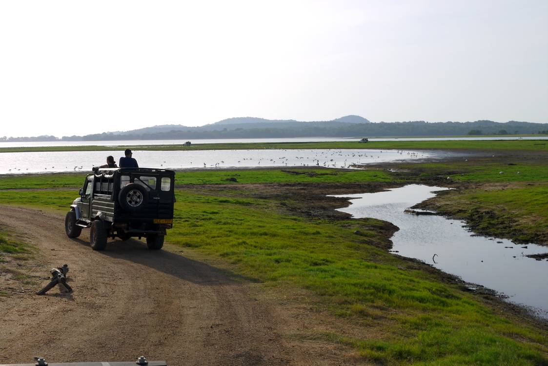 minneriya reservoir safari