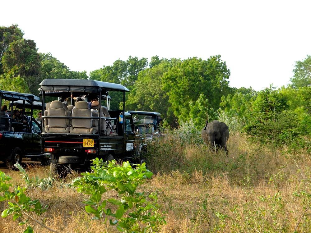 safari jeep sri lanka