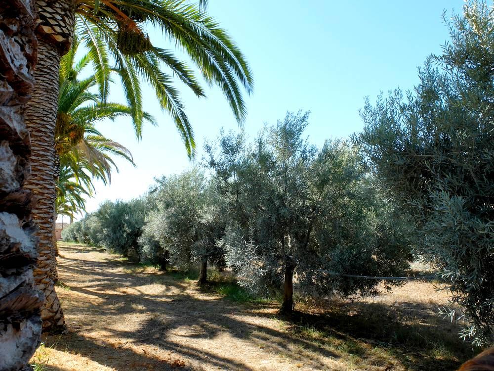 olival monterosa algarve