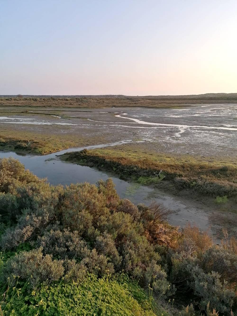 lagune ria formosa