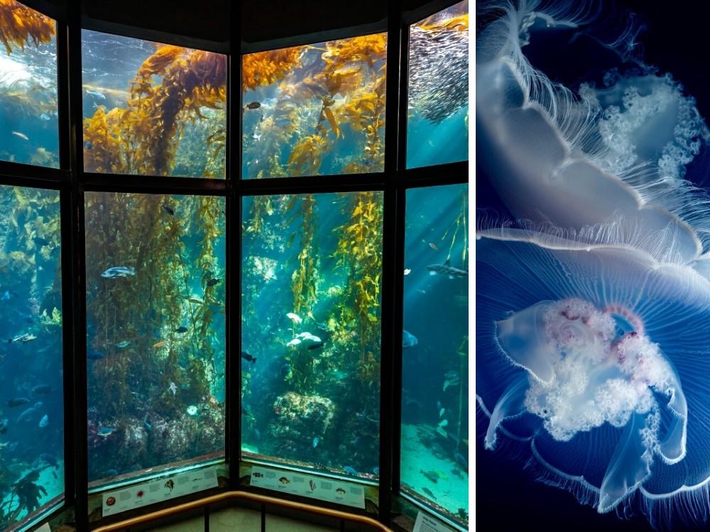 aquarium monterey bay